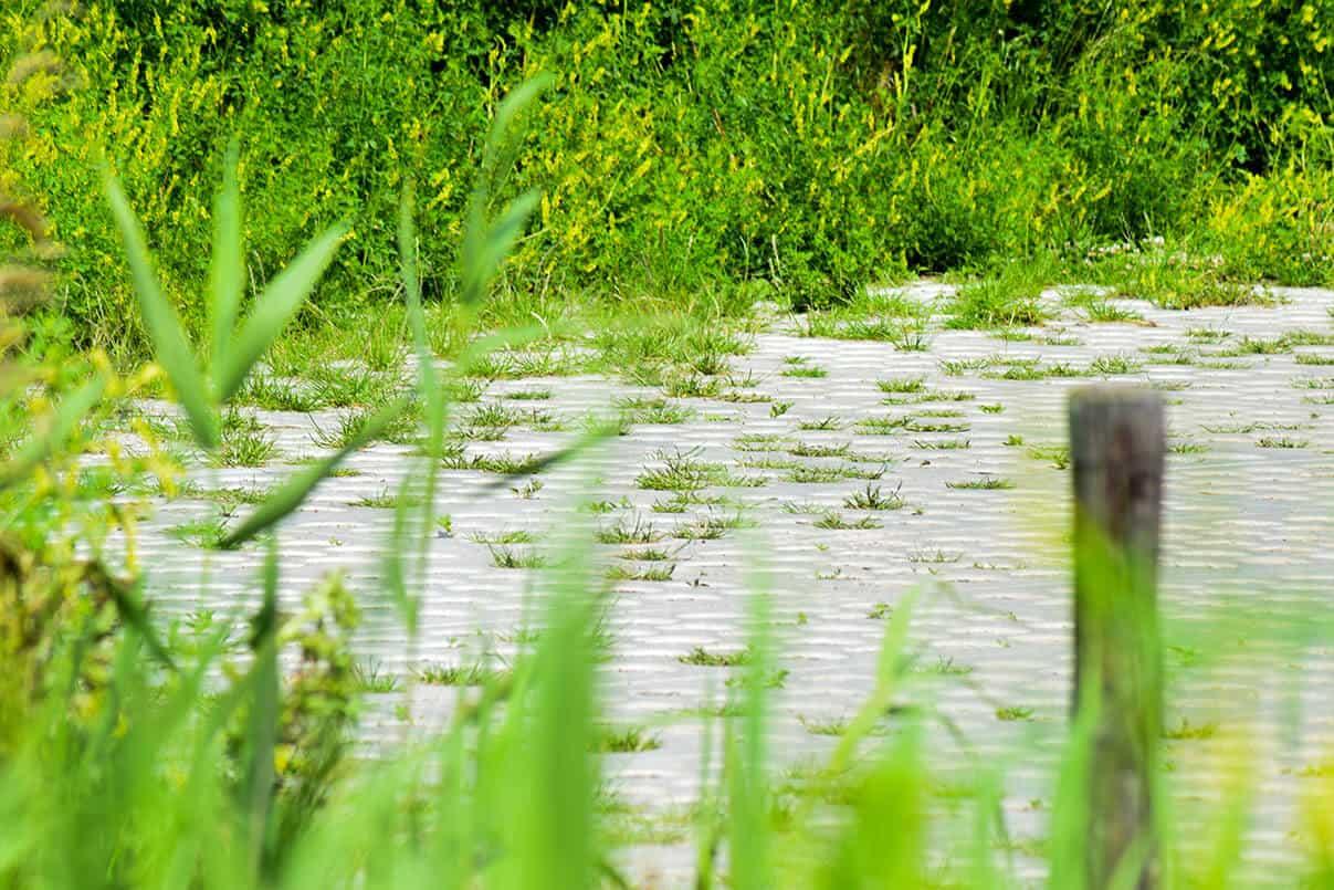 SIMgras verharding in de natuurlijke omgeving | Simbeton.nl